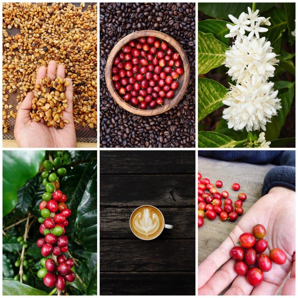 Celebrate Coffee in Louisville